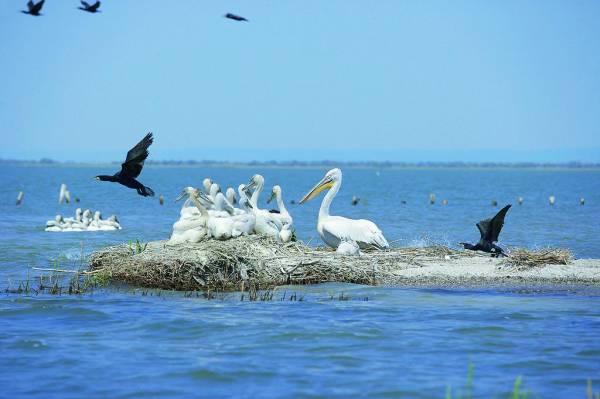 Erstaunliche Vogel- und Pflanzenwelt im Donaudelta